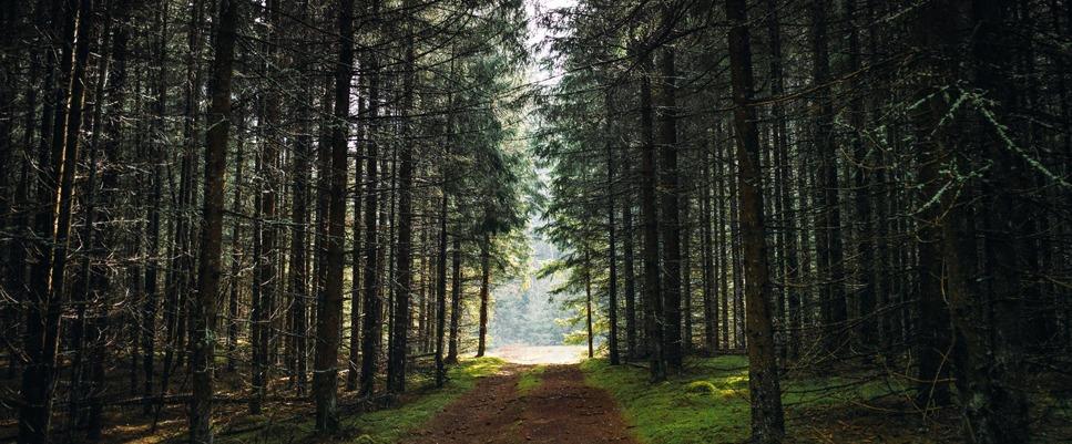 Axysweb partenaire de la filière Forêt, Bois, Papier